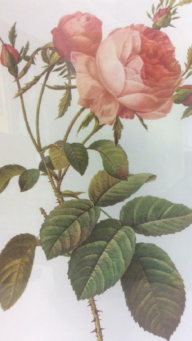 Lot 2 Framed & Matted Floral Prints - 7