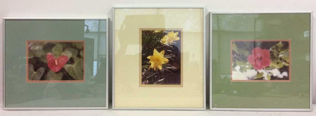 Lot 3 Framed Botanical Photographic Print