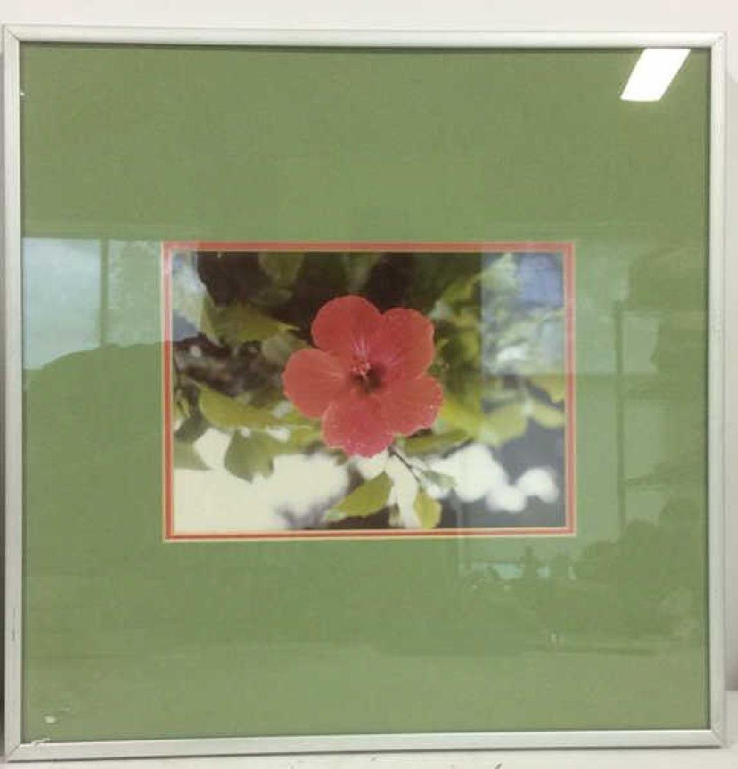Lot 3 Framed Botanical Photographic Print - 2