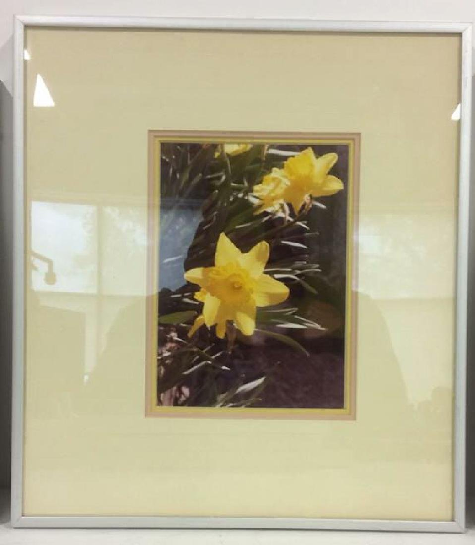 Lot 3 Framed Botanical Photographic Print - 3