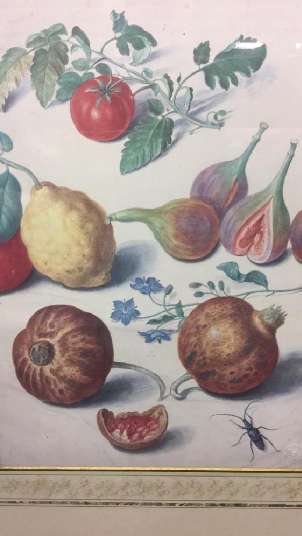 Official Johann Jakob Walther Florilegium Print - 2