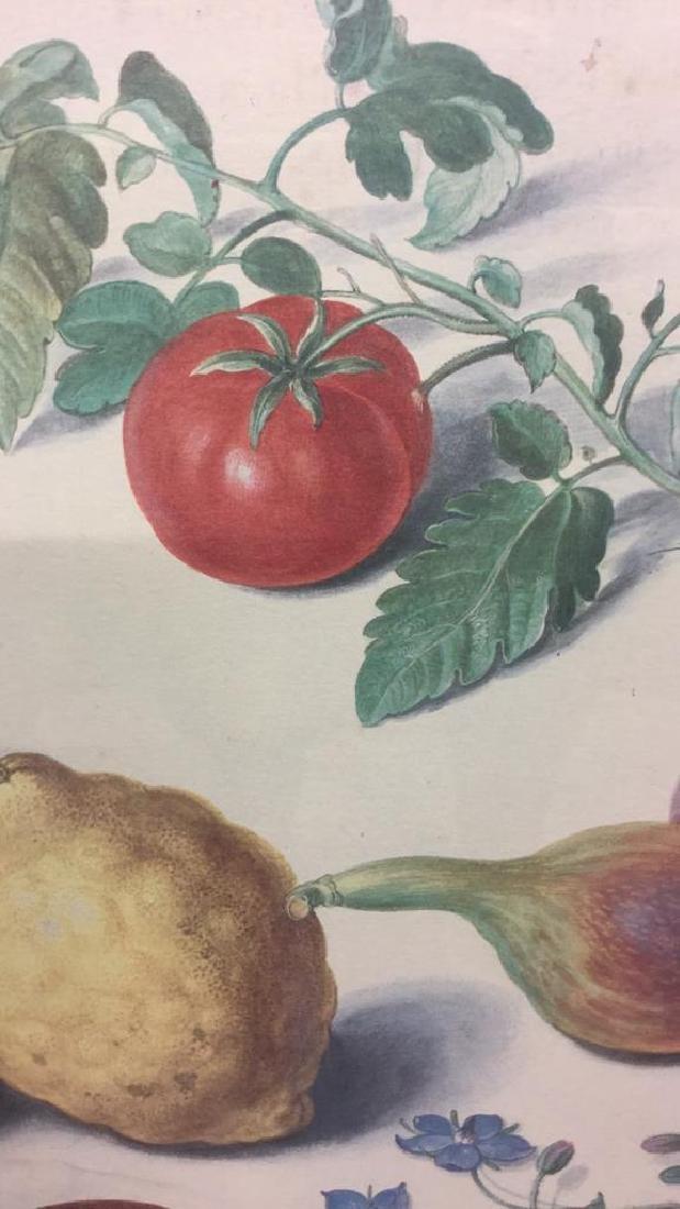 Official Johann Jakob Walther Florilegium Print - 3
