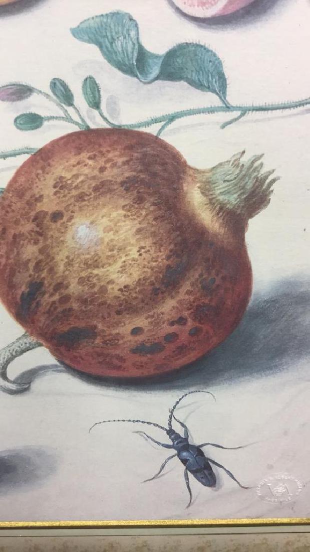 Official Johann Jakob Walther Florilegium Print - 4