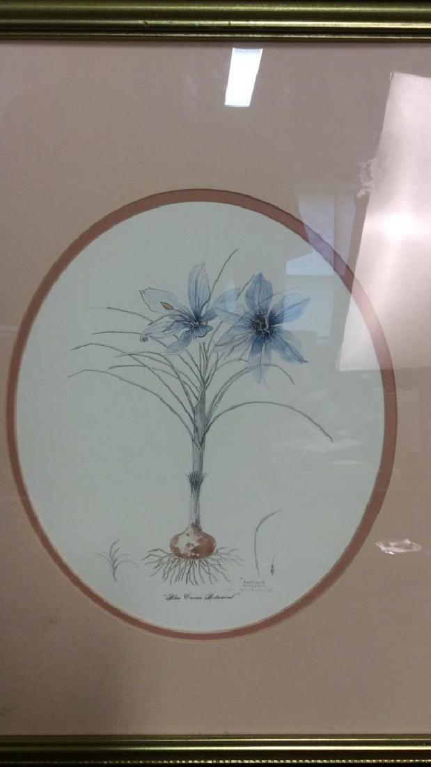 Blue Crocus Botanical Print - 2