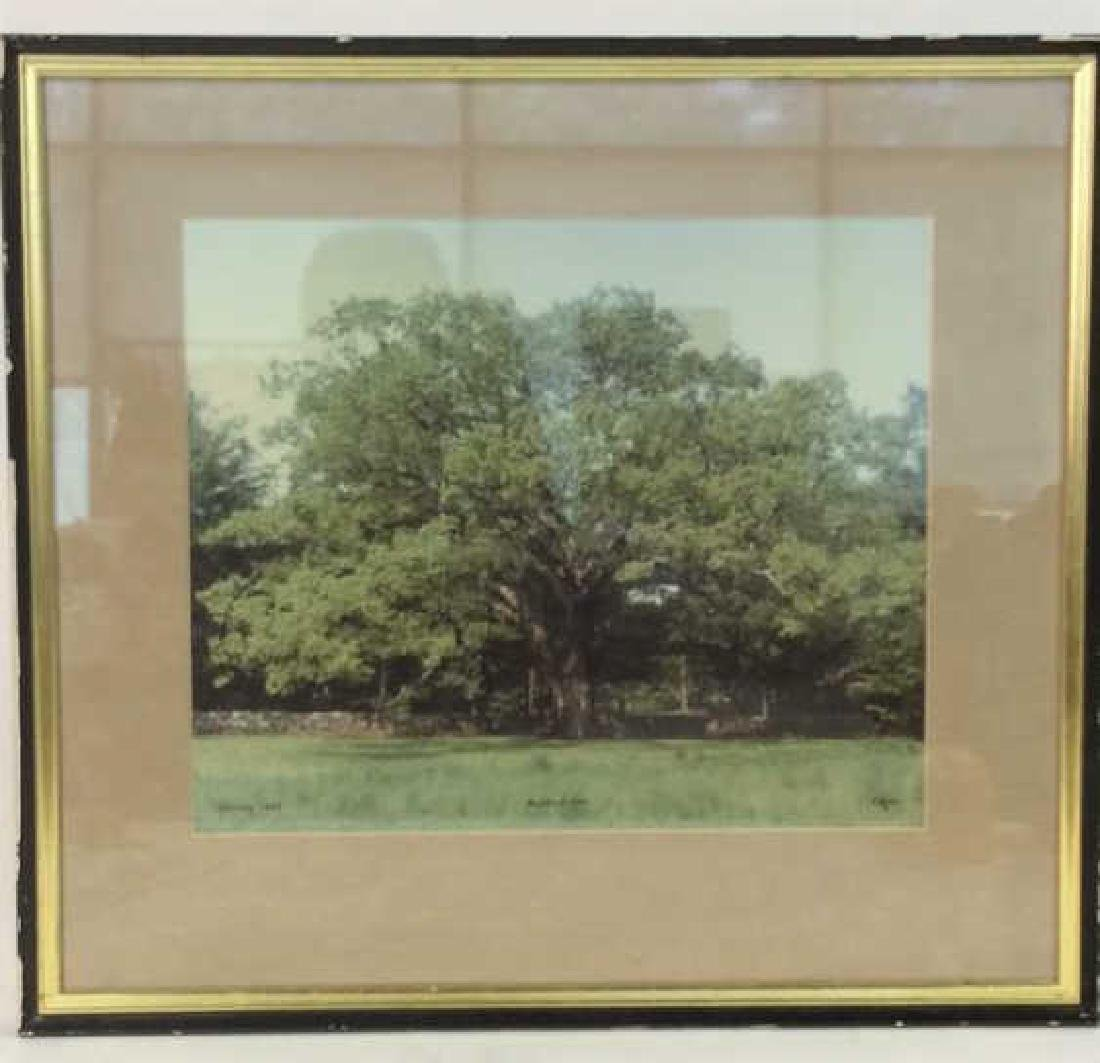 Bedford Oak 1980 Photographic Print