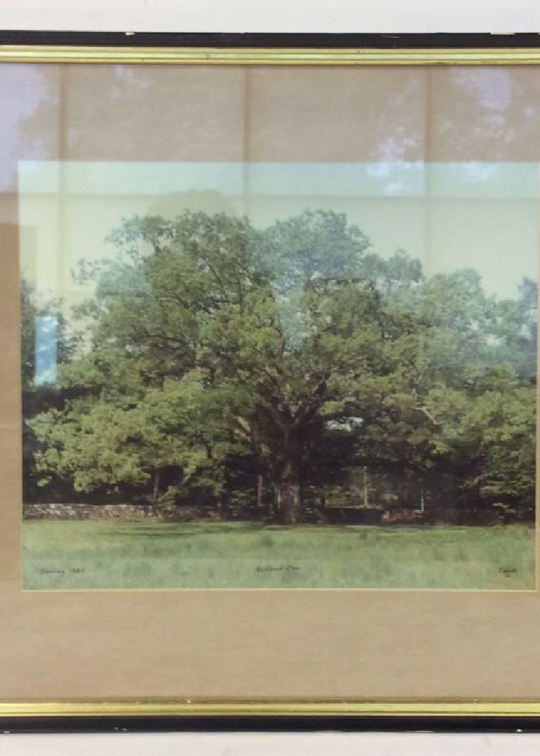 Bedford Oak 1980 Photographic Print - 2
