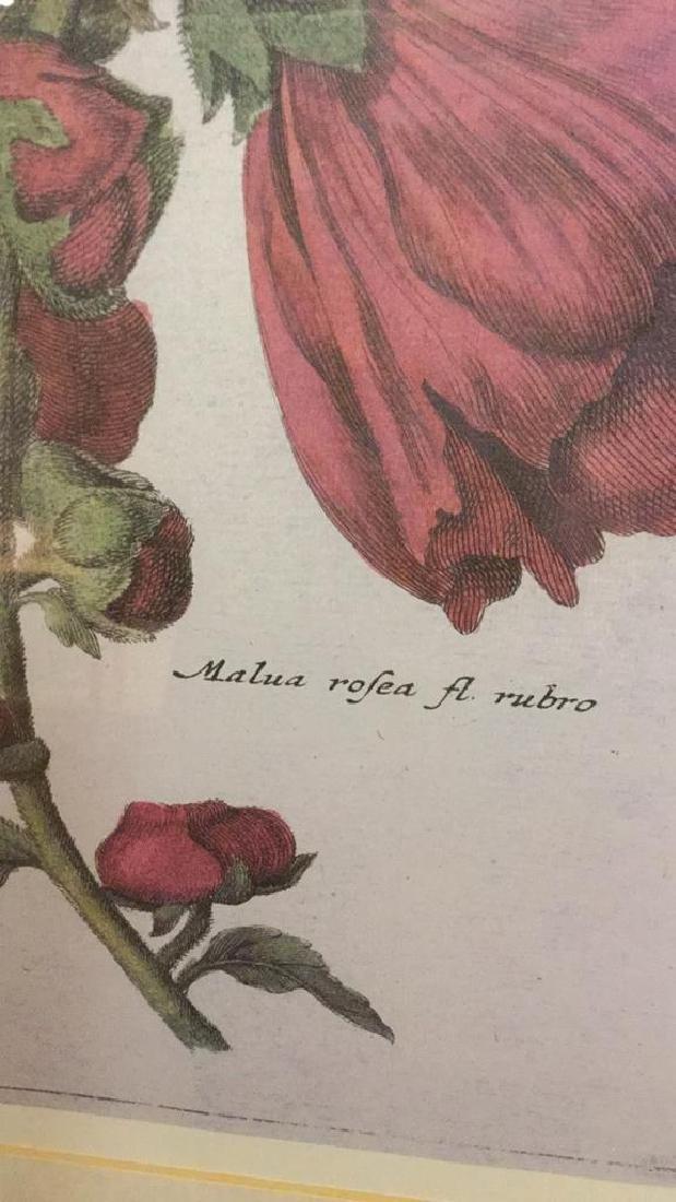 Lot 2 Framed Botanical Prints - 3