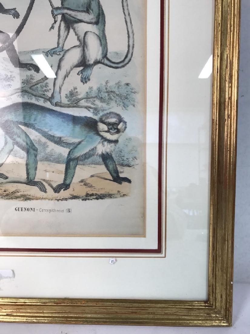 Hand Colored Framed Monkey Art Print, GUENONI - 2
