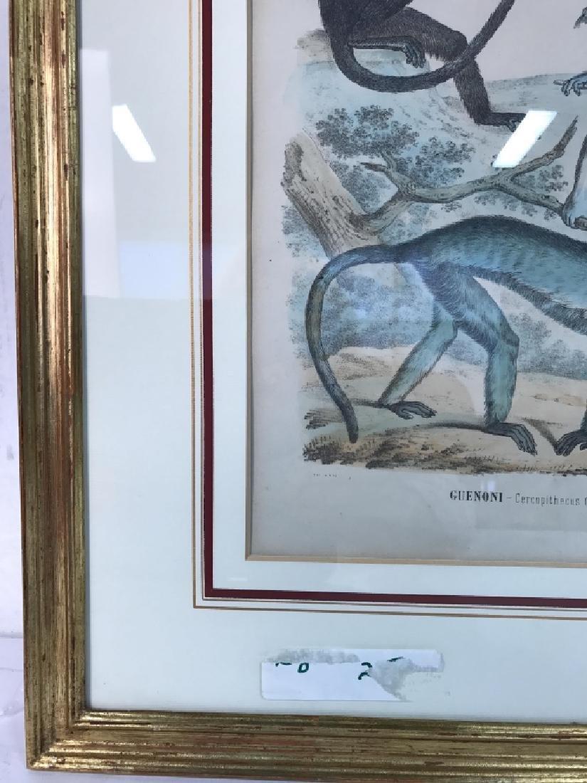 Hand Colored Framed Monkey Art Print, GUENONI - 3