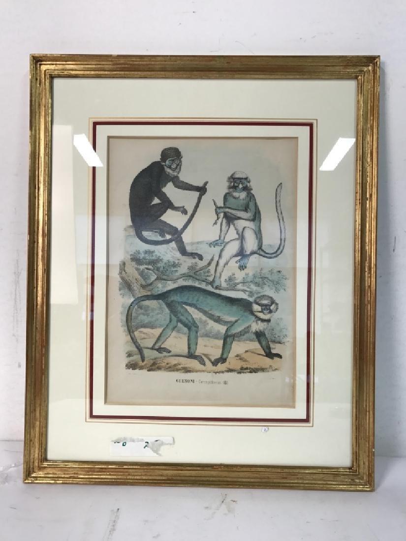 Hand Colored Framed Monkey Art Print, GUENONI - 5