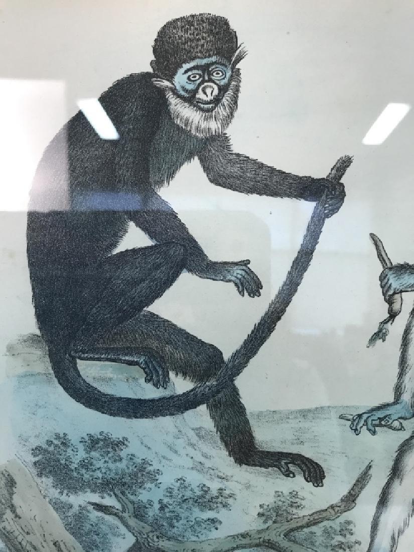 Hand Colored Framed Monkey Art Print, GUENONI - 7