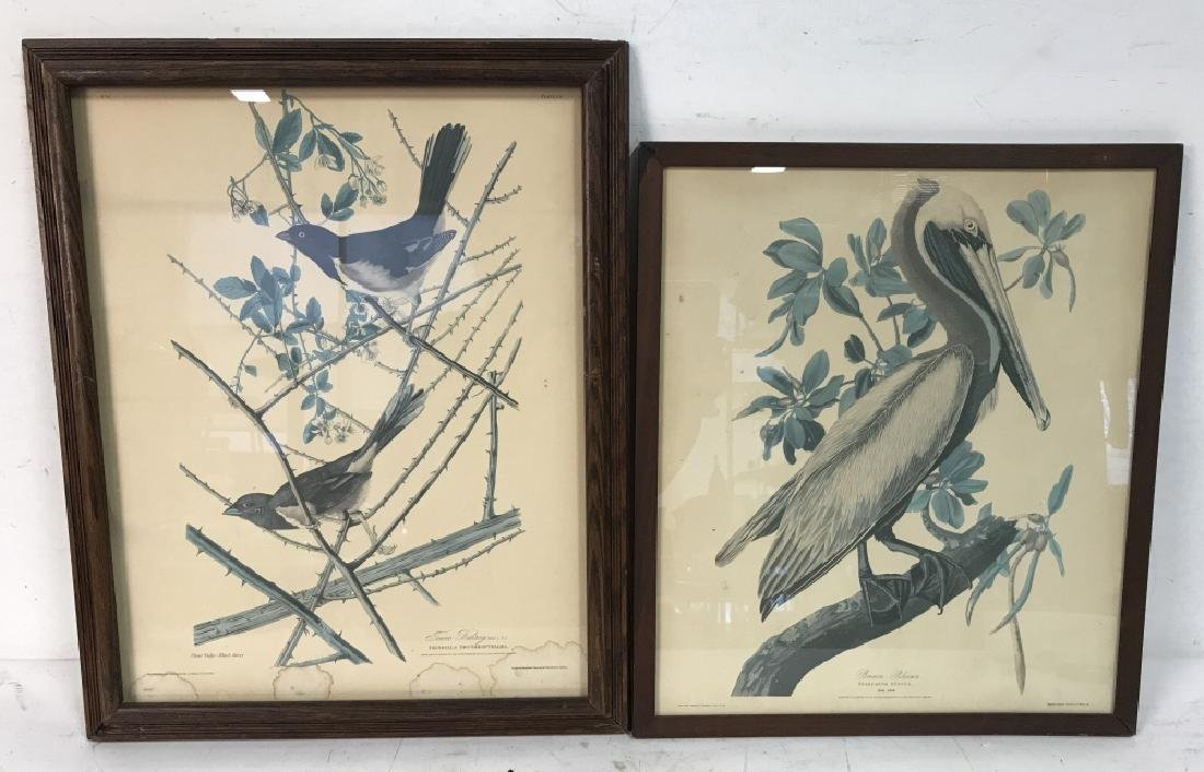 Group Lot of two Bird Prints