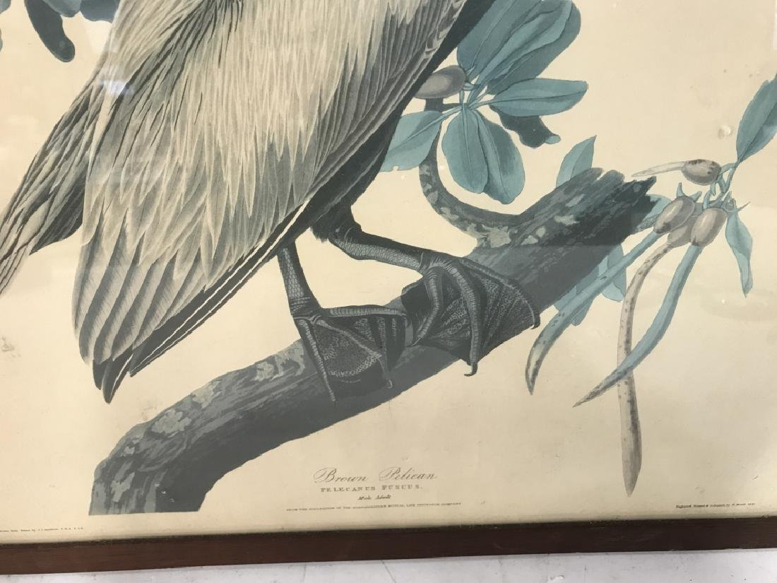 Group Lot of two Bird Prints - 3