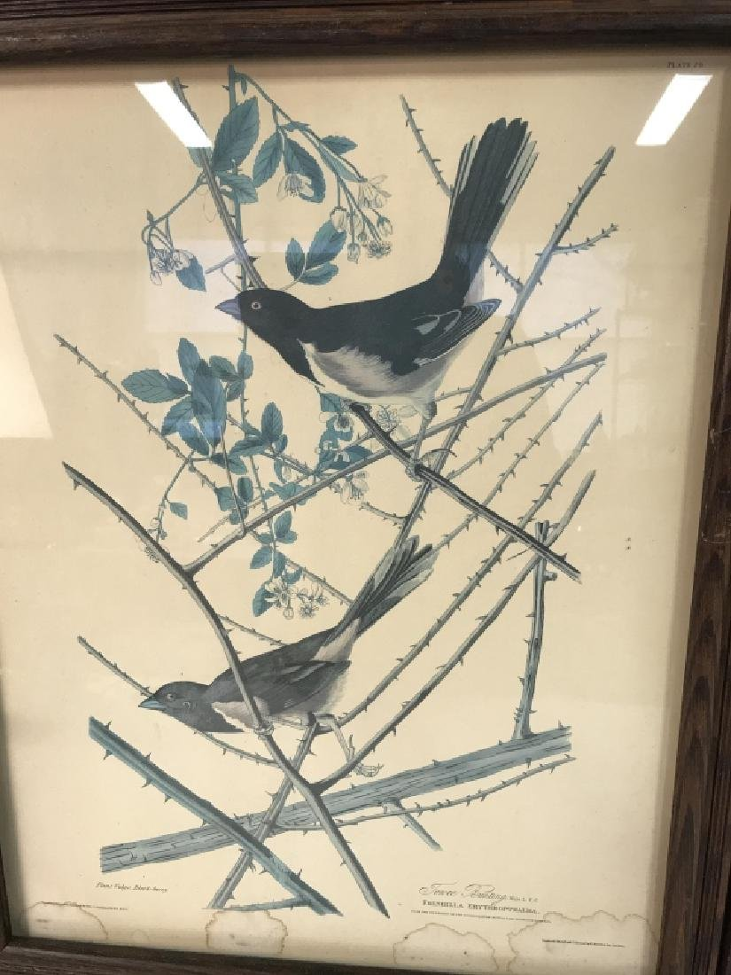Group Lot of two Bird Prints - 6