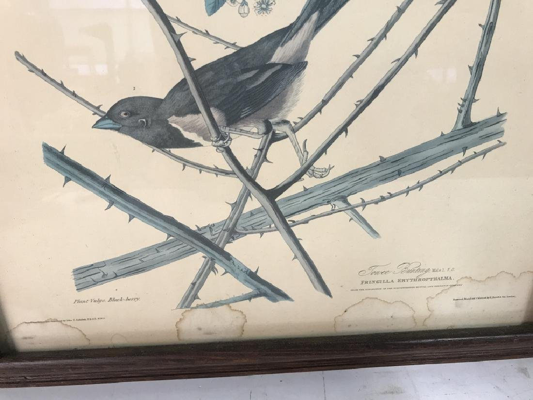 Group Lot of two Bird Prints - 8