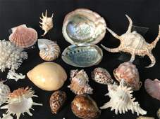 Exotic Seashell Collection