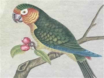 Signed Chinese Watercolor Painting, Parrot Artwork
