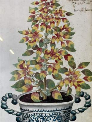 Amaranthus Tricolor Offset Lithograph