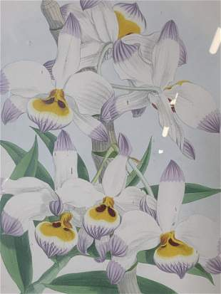 Floral Hand Colored Lithograph of Orchids
