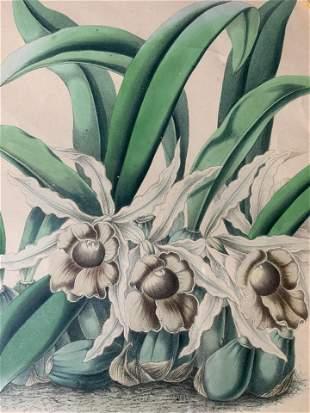 ROBERT WARNER Orchid Lithograph Artwork
