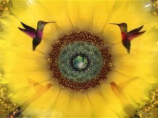 Hummingbird & Flower Lithograph