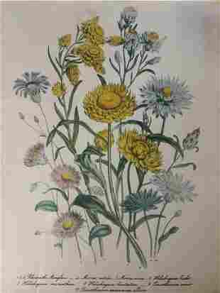 WILLIAM SMITH Botanical Offset Lithograph