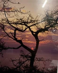 DAVID MARTIN Signed Torrey Pine Sunset Photograph