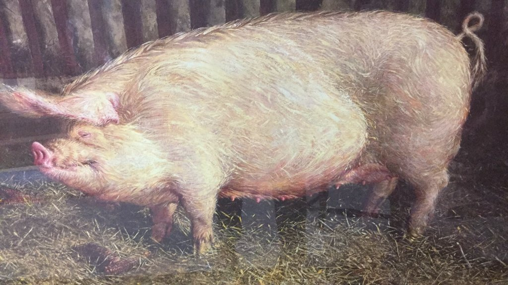 Framed Pig Print By James Wyeth - 2