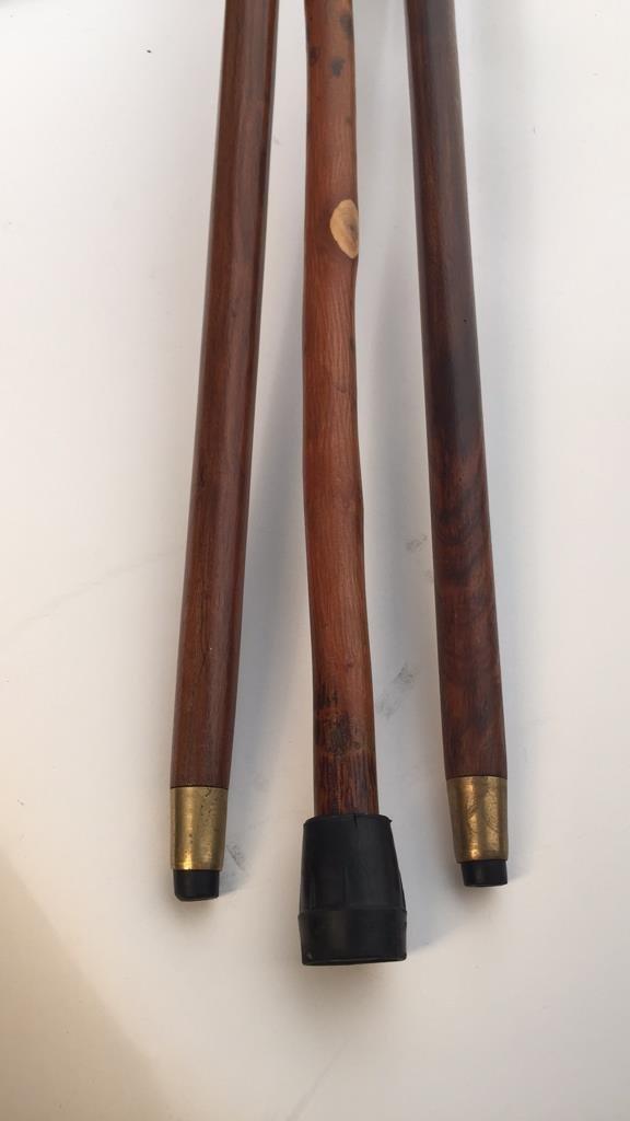 Group of Three Walking Sticks - 2