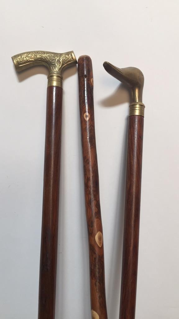 Group of Three Walking Sticks - 3