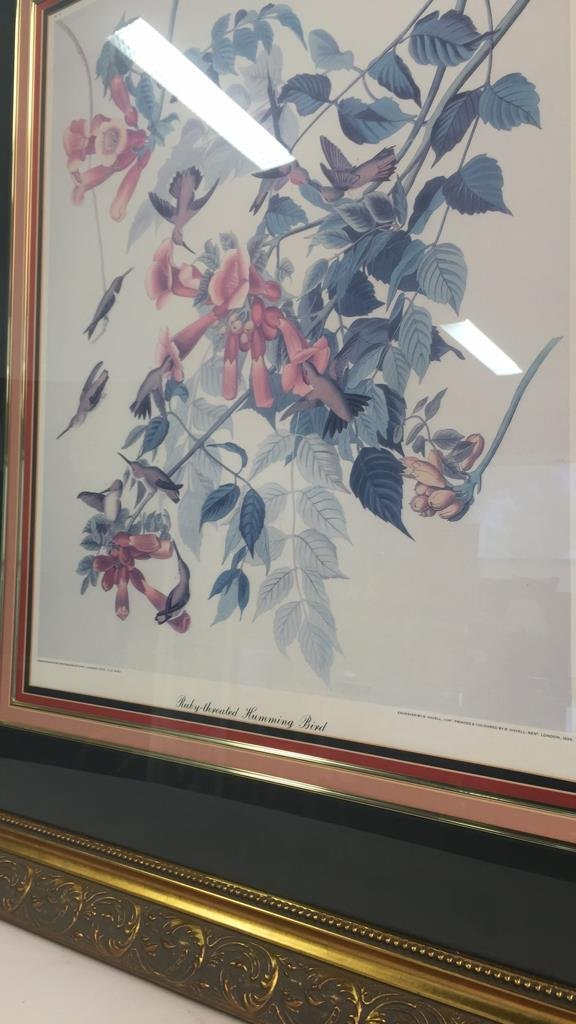 Large Botanical RUBY-THROATED HUMMING BIRD - 4