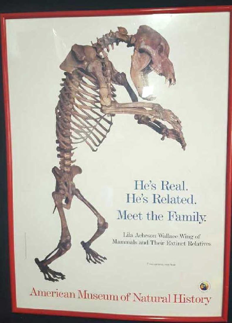 Framed Museum of Natural History Poster Framed Museum
