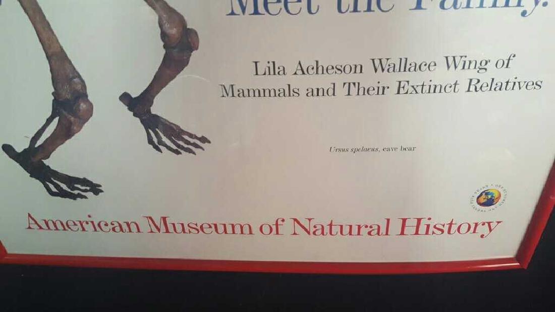 Framed Museum of Natural History Poster Framed Museum - 4