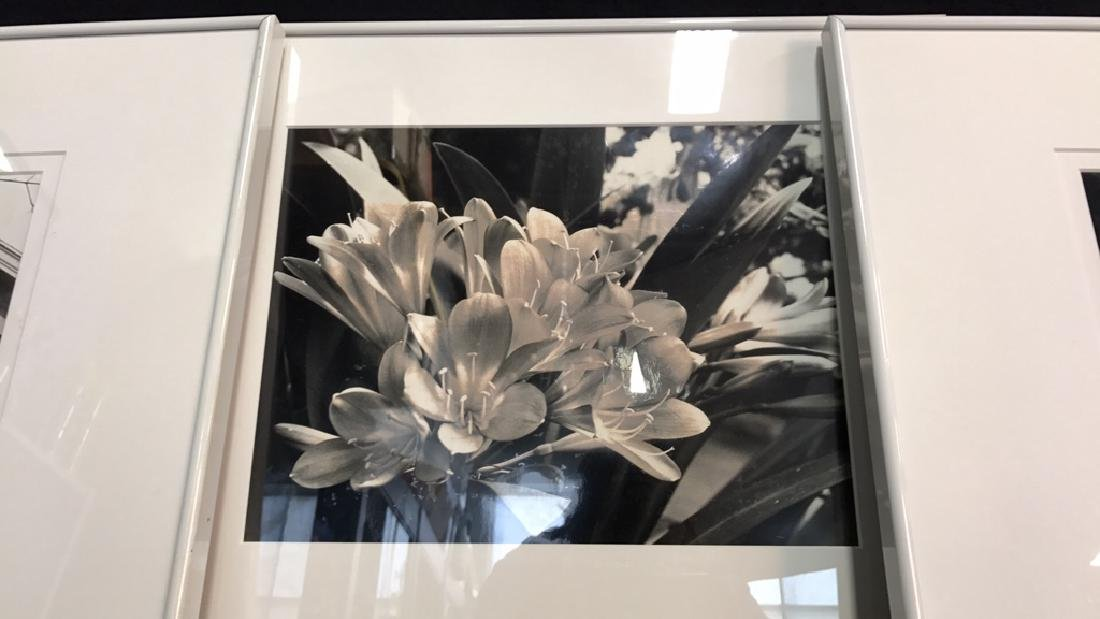 3 Piece White Framed B&W Photographs 3 Piece White - 3