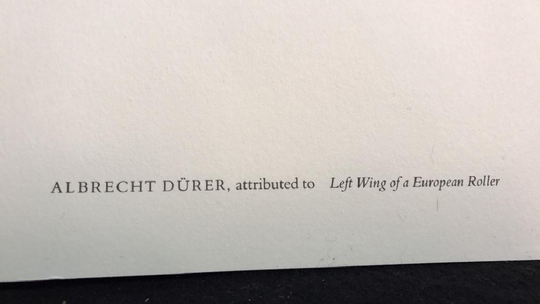 Albrecht Durer Left Wing Of A European Roller Albrecht - 5