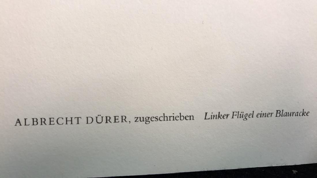 Albrecht Durer Left Wing Of A European Roller Albrecht - 6