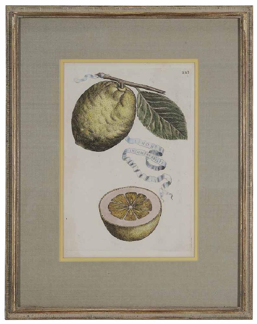 Five Decorative prints - 5