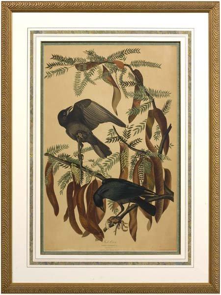 23: Havell Edition Audubon print