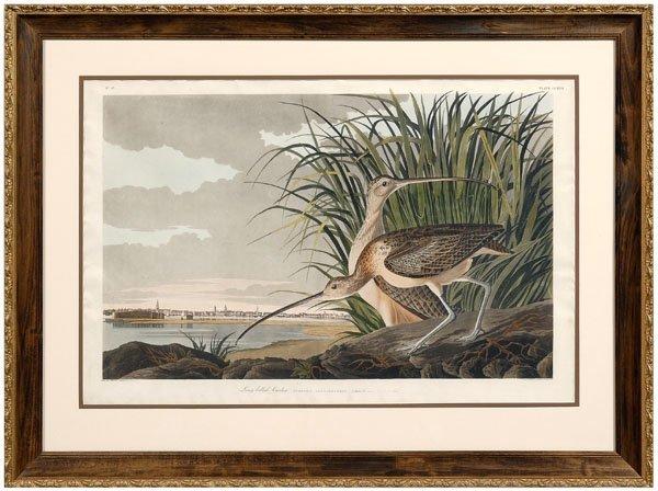 103: Havell edition Audubon print