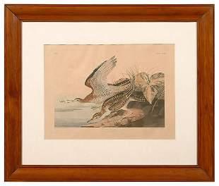Audubon print,