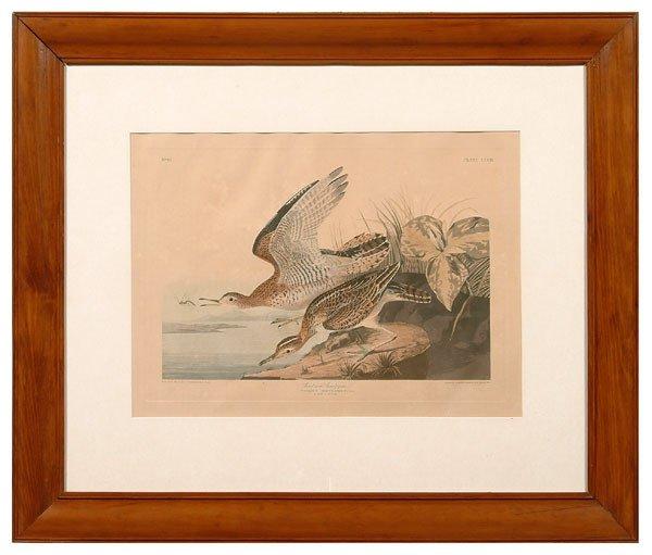 22: Audubon print,