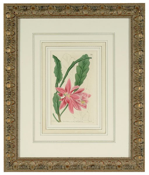 618: Hand-colored floral engravings,