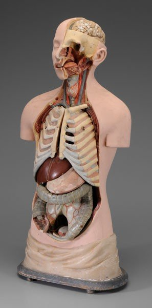 662: Anatomical Model of Human Body