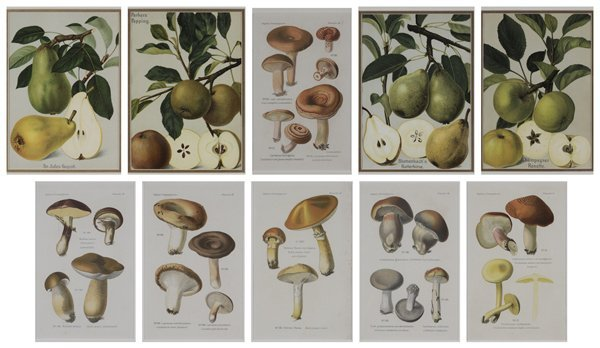 0001: Ten Botanical Prints
