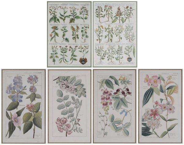 0002: Six Botanical Prints