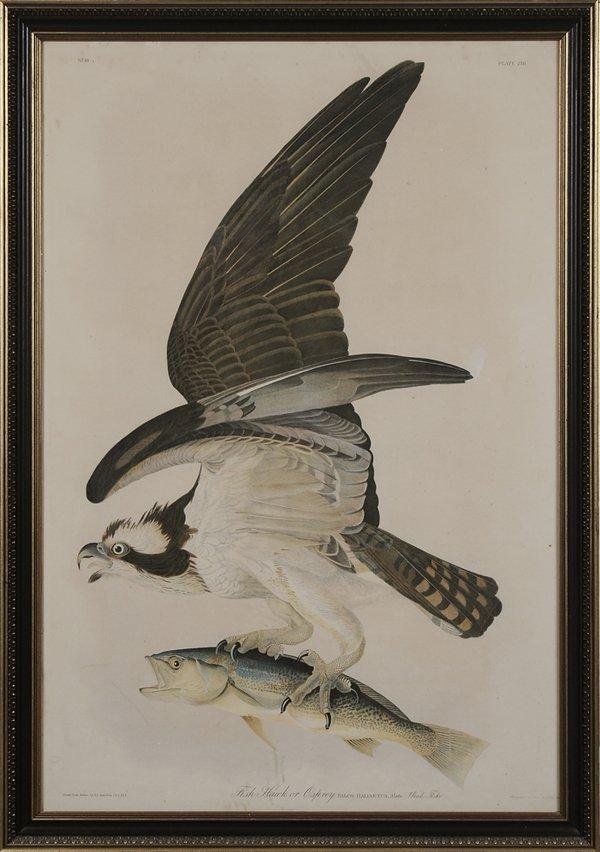 0016: After John James Audubon