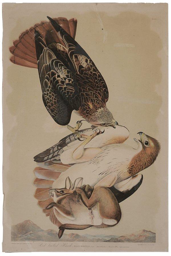 0017: After John James Audubon