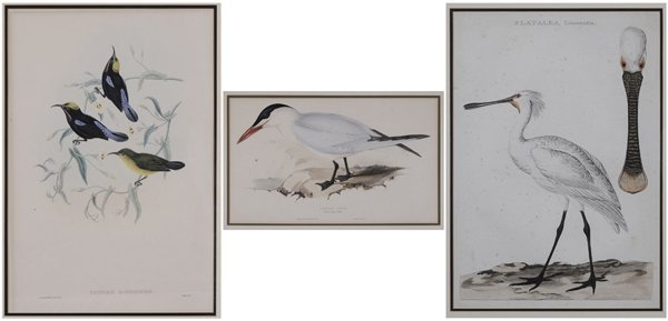 0018: Three Ornithological Prints