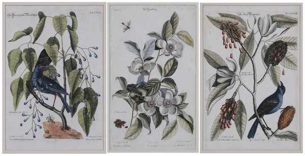 0020: After Mark Catesby