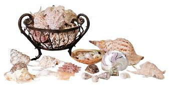 1191 Large Group Assorted Sea Shells